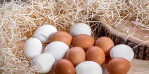 Tavuk yumurtası üretiminde rekor