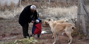Pazar arabasıyla 20 yıldır sokak hayvanlarına yiyecek taşıyor