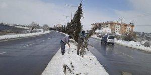 Beyşehir'de kar yağışından zarar gören ağaçlara bakım çalışması