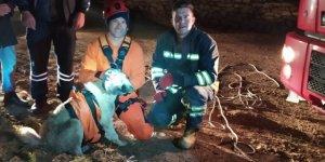 Irmak kenarında mahsur kalan köpeği itfaiye ekipleri kurtardı