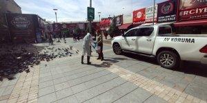 Kayseri'de güvercinler için yemleme yapıldı