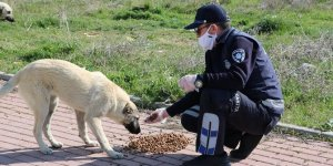 Beyşehir'de zabıtadan sokak hayvanlarına yiyecek desteği