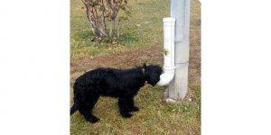 Nallıhan Belediyesi sokak hayvanları için yem bıraktı