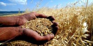 Konya Ticaret Borsası mısır, buğday, beyaz arpa, fasulye fiyatları