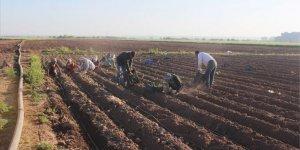 Sokağa çıkma kısıtlamasından muaf tutulan çiftçiler tarlanın yolunu tuttu