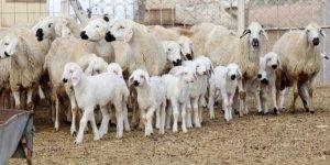 53 milyon hayvan üreticisine 1 milyar 100 milyon destek ödemesi