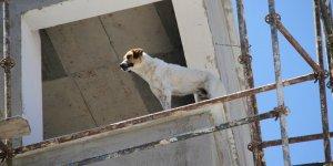 Konya'da inşaat halindeki binanın 6. katına çıkan köpek korkuttu