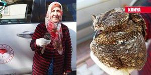 Yaralı halde bulunan çobanaldatan kuşu tedaviye alındı