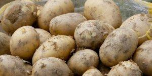 Bakanlıktan 50 bin ton patates ihracatına izin