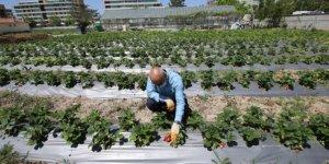 Konya Büyükşehir Belediyesi'nden tarımsal üretime destek