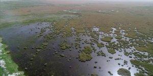 """Bozkırın ortasındaki """"yeşil cennet"""" 250'den fazla kuş türüne kucak açıyor"""