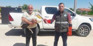 Konya'da yaralı pelikan koruma altına alındı