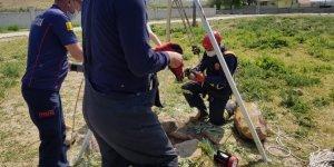 Konya'da su kuyusuna atılan köpek yavruları kurtarıldı