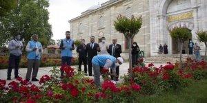 Selimiye Camisi'nde şükür kurbanı kesildi