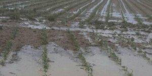 Karapınar'da etkili olan dolu yağışı, ekili alanlarda zarara yol açtı
