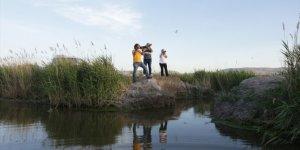 Akgöl Sazlıkları'nda su tutması için yapılan dolgu set tahrip edildi