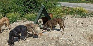 Sokak hayvanlarının barınakları çalındı