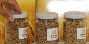 Adana'dan Irak'a yerli buğday tohumu ihracatı