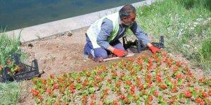 Kırşehir Belediyesinden park ve yeşil alanlarda düzenleme