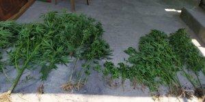 Hatay'da evlerinin bahçesinde Hint keneviri yetiştiren 2 şüpheli yakalandı