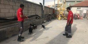 Akaryakıt istasyonu kedilere yuva oldu