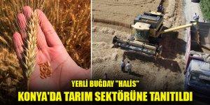 """Yerli buğday """"Halis"""" Konya'da tarım sektörüne tanıtıldı"""