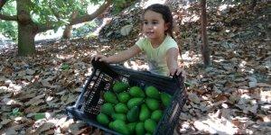 Avokado hasadında yeni hedef 70 milyon