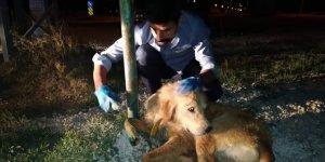 Konya'da sulama kanalına düşen köpeği itfaiye kurtardı