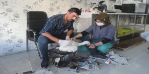Karapınar'da yaralı leylek tedavi altına alındı