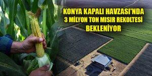 Konya Kapalı Havzası'nda 3 milyon ton mısır rekoltesi bekleniyor