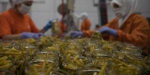 Türk turşusu 120 ülkeye ihraç edildi