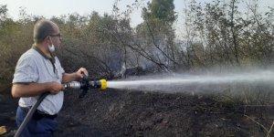 Bursa'da makilik alanda çıkan yangın korkuttu