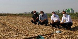 Adana'da 106 bin ton yer fıstığı rekoltesi bekleniyor