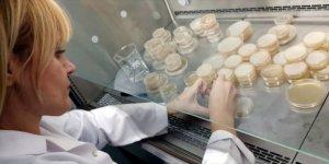 KAEÜ tıbbi ve yenilebilir mantar türlerinin üretim üssü olacak