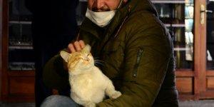 """Tarihi Taşhan Çarşısı'nın maskot kedisi: """"Müdür"""""""