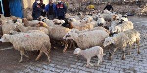 Konya'da çalınan 124 küçükbaş hayvandan 99'u sahibine teslim edildi
