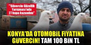 Konya'da otomobil fiyatına güvercin! Tam 100 Bin TL