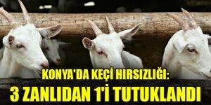 Konya'da keçi hırsızlığı yaptığı iddiasıyla yakalanan 3 zanlıdan 1'i tutuklandı