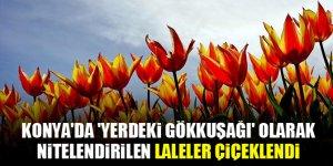 Konya'da 'yerdeki gökkuşağı' olarak nitelendirilen laleler çiçeklendi