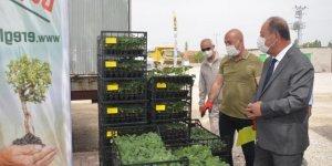 Ereğli Belediyesi 180 bin adet fide dağıttı