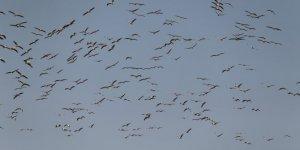 Ak pelikanların gökyüzündeki dansı havadan görüntülendi