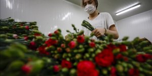 Turkey exported around 70M flowers ahead of Mother's Day