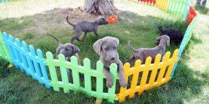 ABD'de, kuduz nedeniyle 100'den fazla ülkeden köpek ithali bir yıl süreyle yasakladı