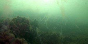 Asıl tehlike denizin altında: Salyalar su altı yaşamını öldürüyor