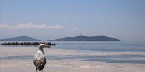 İstanbul Anadolu Yakası kıyılarında müsilaj görülmeye devam ediyor