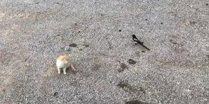 Karganın tehlikeli oyunu