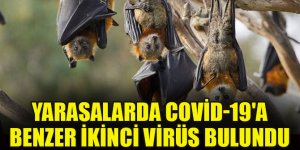 Çin'de yeni araştırma: Yarasalarda Covid-19'a benzer ikinci virüs bulundu