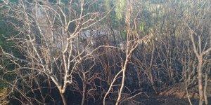 Manisa'nın Demirci ilçesinde çıkan yangında 3 dönüm alan zarar gördü
