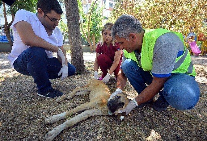 İki yılda 6 bin 314 sokak hayvanına acil müdahale