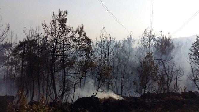 Osmaneli'nin Avdan köyünde çıkan orman yangını kontrol altına alındı